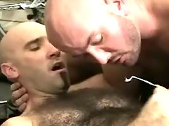 Bear faggots sperm by turns on curly belly