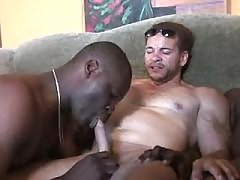 Tight black dick-holders arrange wild orgy