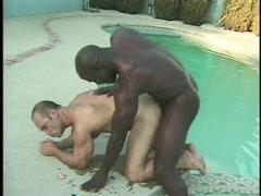 Ebony Gangsta Faggot