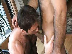 Hairy man-lover sucks appetizing knob