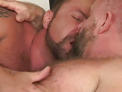 Double bear daddies lick in couch