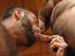 Bear dilf sucks appetizing knob