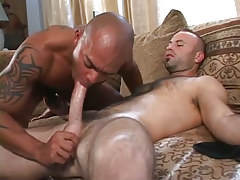 Hirsute homo sucked by latin dude on mattress